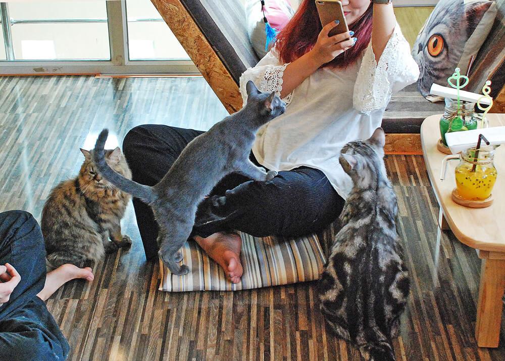 人に慣れた猫たちは簡単に客のひざに乗ってくる